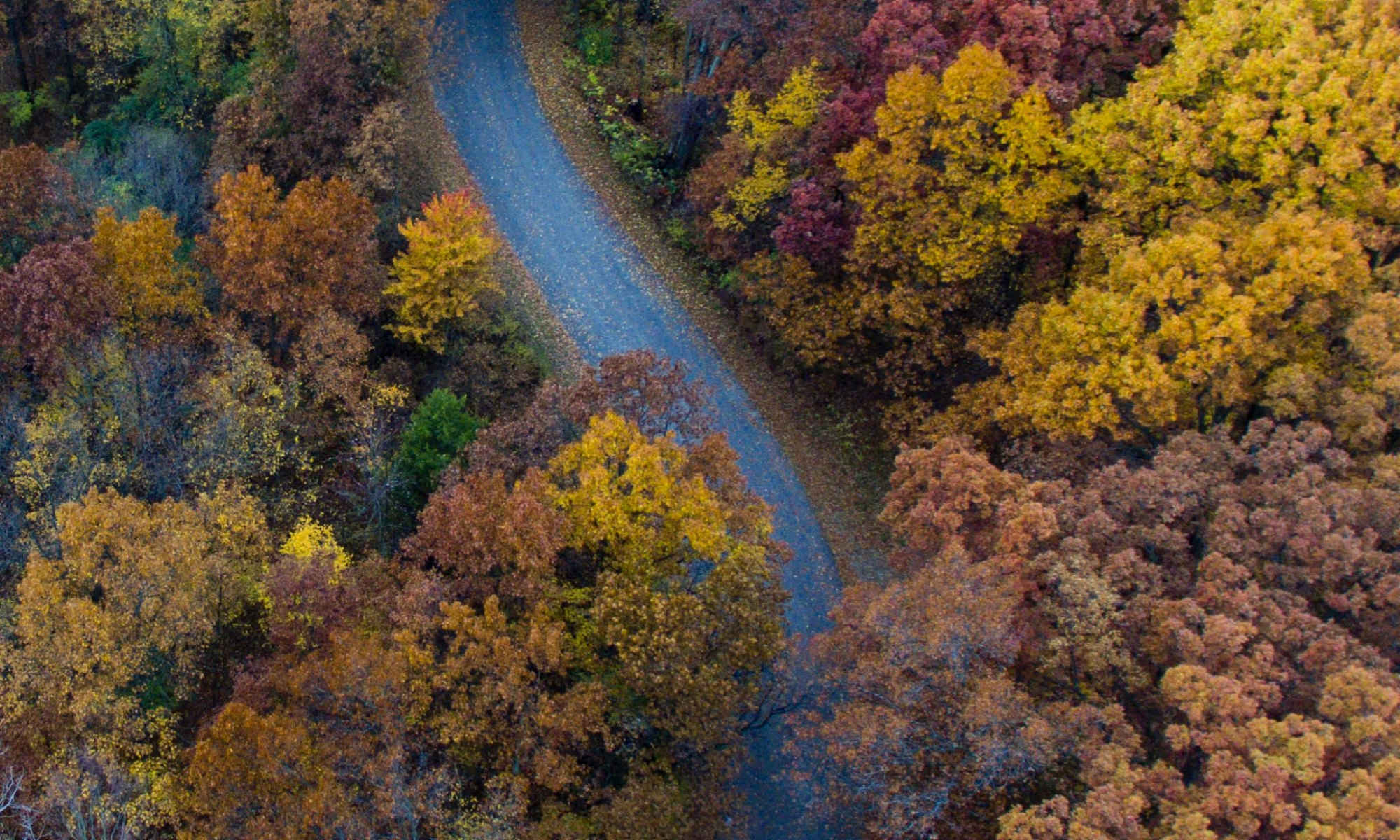 trees by road and fall foliage